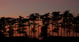 Sunset & Trees